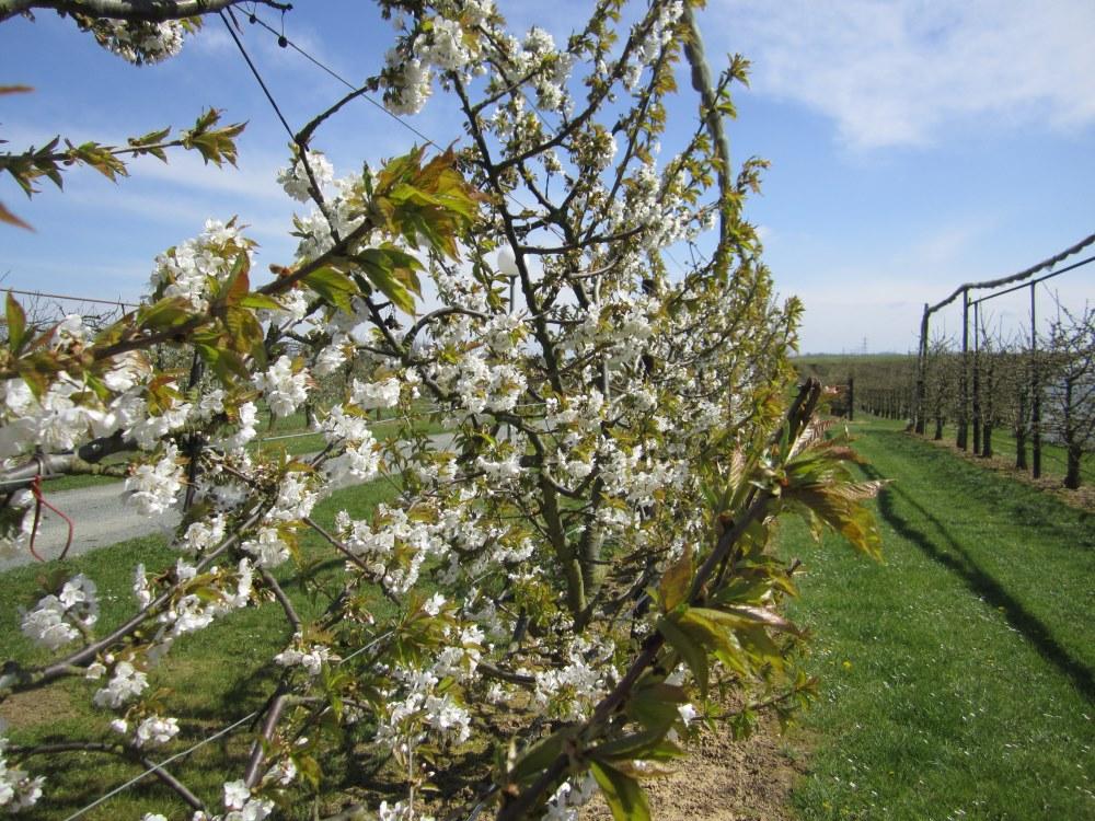 Sortie chez nos producteurs de fruits le 5 mai