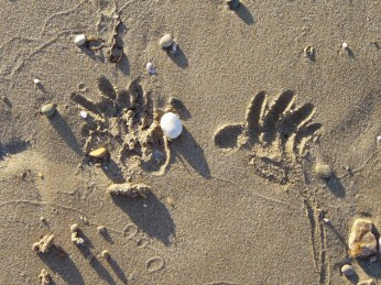 Hands on the Sand