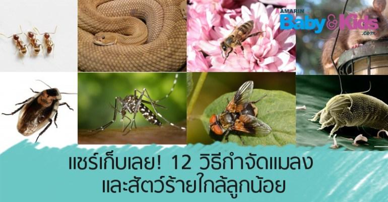 วิธีกำจัดแมลง