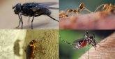 วิธีไล่แมลงแบบธรรมชาติ