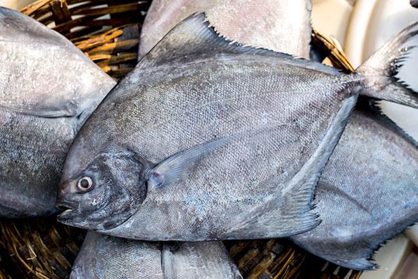 ปลาจะละเม็ดดำ
