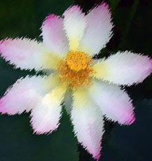 Imagen de una flor de loto