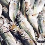 Tour de Peixe e Marisco