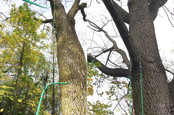 How To Attach Something To A Tree Without Hurting The Tree