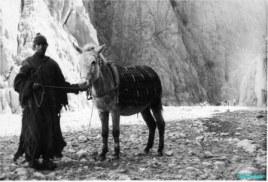 Shepherd and mule