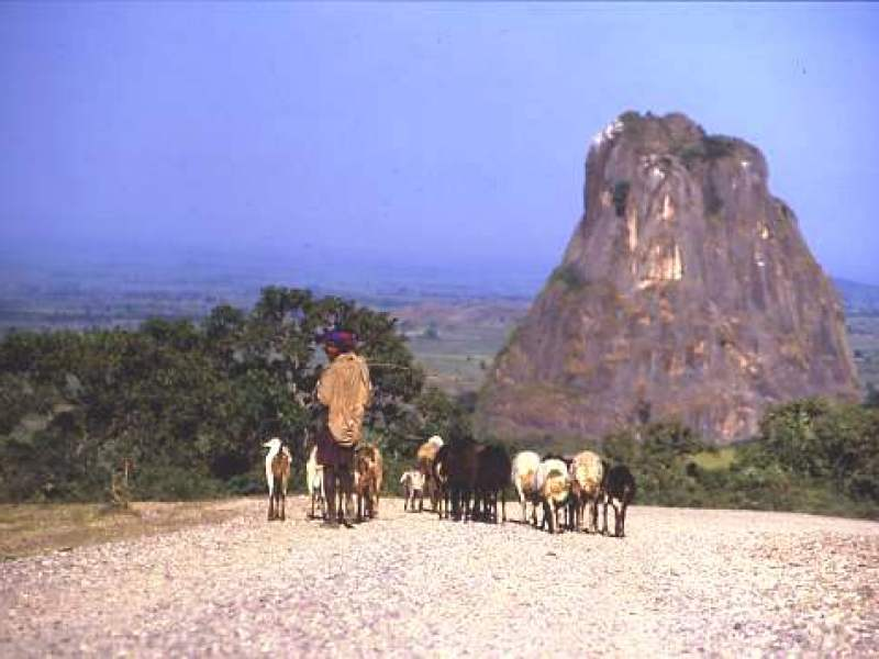The Chinese road, central Ethiopia with a roaming shepherd taking his flock to better pasture