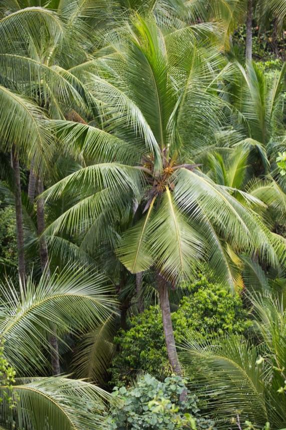 02-pulau-ubin-greenery