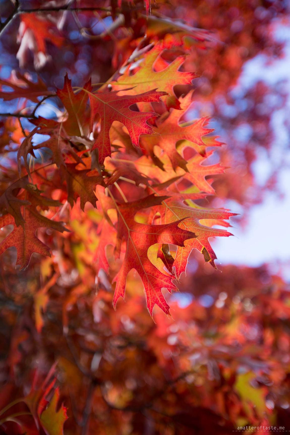 Finding Autumn - Macedon VIC 2015
