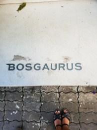 Bosgaurus Coffee Roasters name