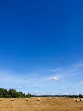 Estonia road trip - fields