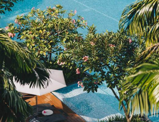top view of part of the giant pool at W Hotel Singapore with trees and palm trees around it.