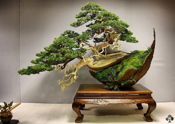 bonsai indah