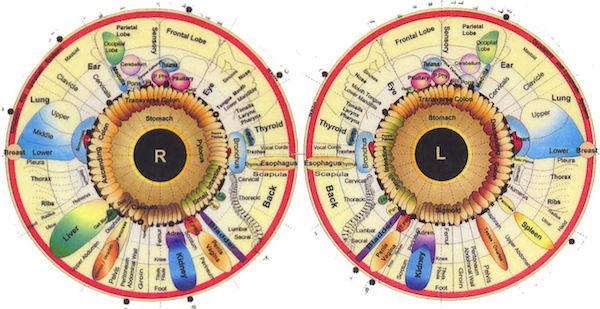diagram iridologi