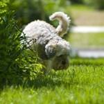 5 Tips Menyingkirkan Bau Urin Anjing dengan Jeruk Nipis