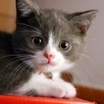 5 Tanda & Gejala Serangan Kutu pada Kucing & Penanganannya