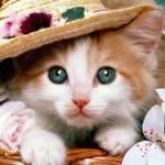 Gejala, Penyebab & Pengobatan Cacing Pita pada Kucing