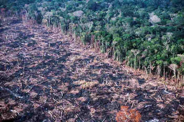 Bagaimana Penebangan Hutan Menyebabkan Pemanasan Global? » Amazine.co