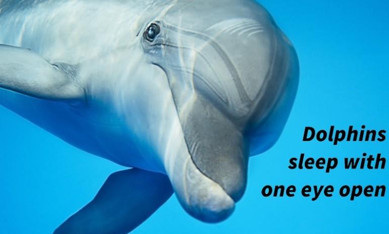 lumba-lumba tidur1