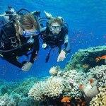 11 Fakta dan Informasi Menarik tentang Scuba Diving
