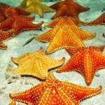 10 Fakta dan Informasi Menarik tentang Bintang Laut