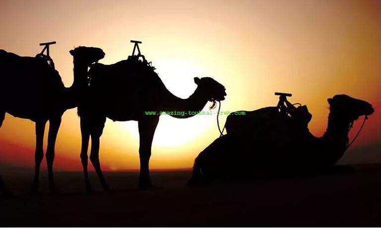 4-day fes desert tour