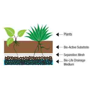 Bio Life Drainage Medium