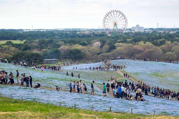 Hitashi seaside park (28)