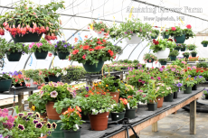 Amazing Flower Farm Greenhouse