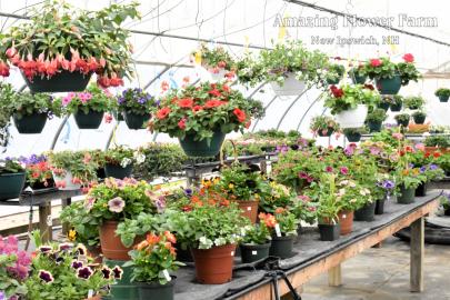 Amazing Flower Farm Greenhouse