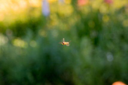 Pollinator in flight