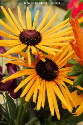 flower-susan-lindquist1