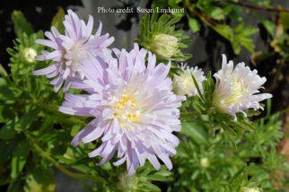 flower-susan-lindquist10