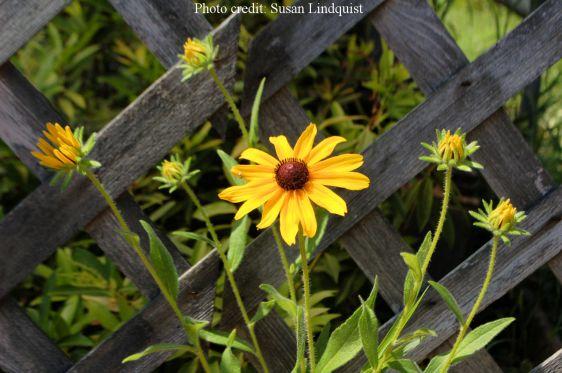 flower-susan-lindquist5