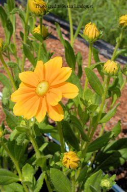 flower-susan-lindquist9