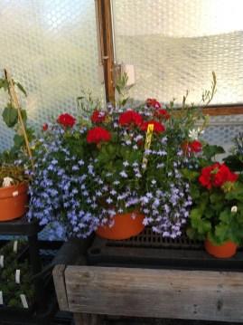Memorial Planters