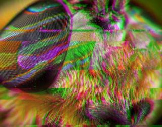 DARPA Wants to Build Conscious Robots Using Insect Brains