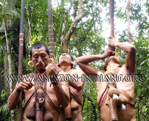 amazonicos