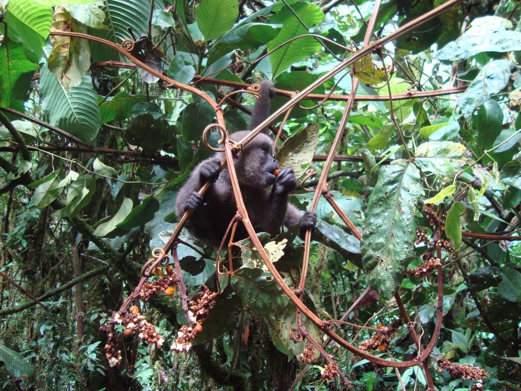 Galapgos Amazon volunteer tour in Ecuador