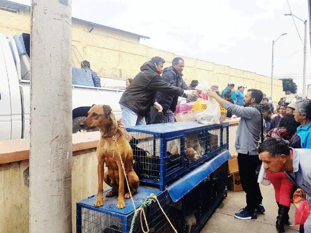 Los animales son abandonados hasta en sacos de yute.