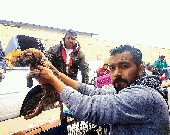 El Albergue Municipal se lleva cada semana a perros y gatos que son abandonados luego de la feria.