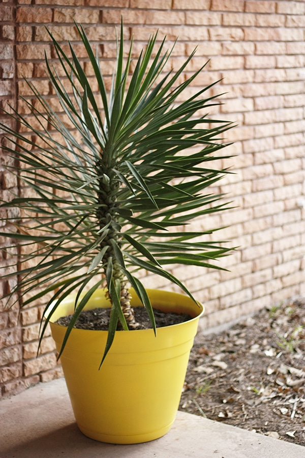Pineapple Planter without stripes
