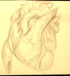 heart_082013