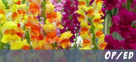 featurebanner_snapdragons_oped