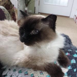 Caico cat 20150521_140603