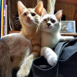 drews-kittens