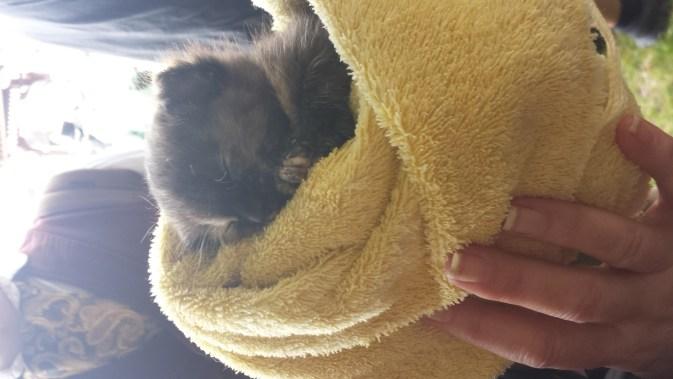 kittens_spwf_2017 (14)