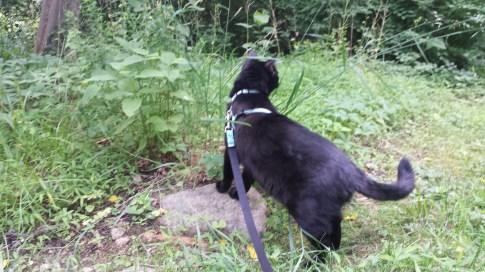 Gus on a walk