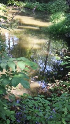 romy yoga immersion training pond