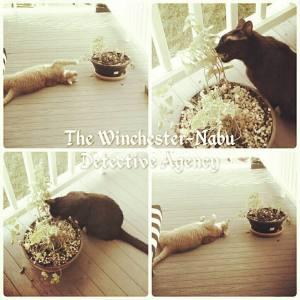 Winchester-Nabu Detective Agency catnip pics