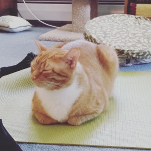 Zen Ollie